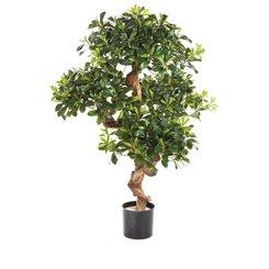 PITTOSPORUM plante artificielle, 120 cm