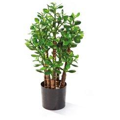 CRASSULA OVATA artificial plant, 60 cm