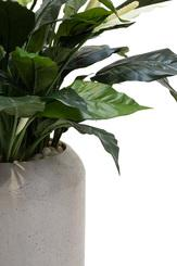 SETS BUSINESS, CIGAR 42/100 cm, SPATHIPHYLLUM DELUXE 80 cm