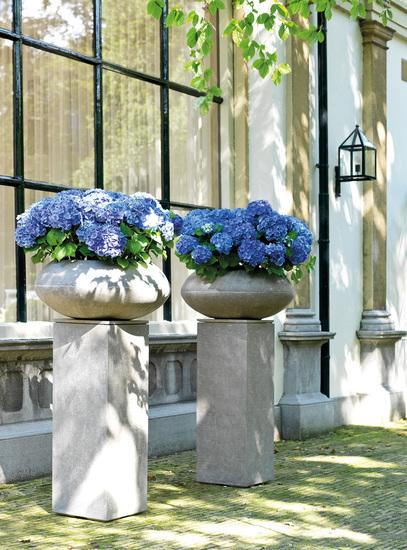 Plant pots concrete for indoor and outdoor
