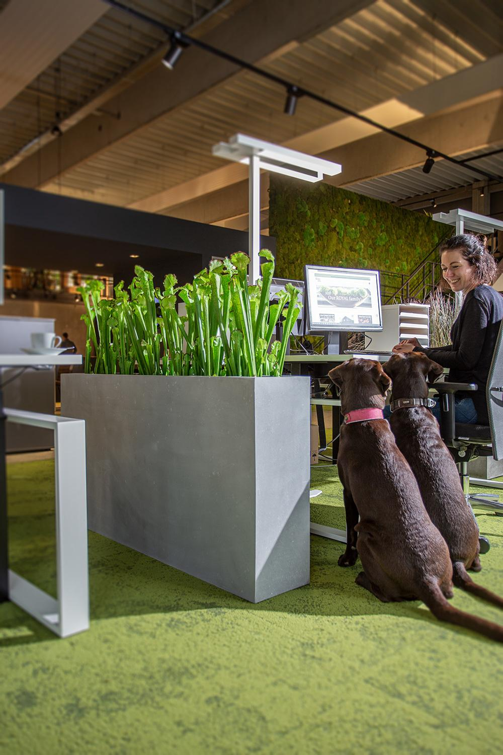 Artificial plants in the office